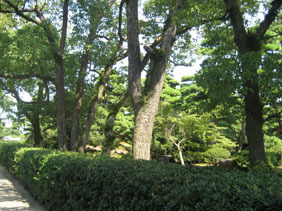 IMG_4756公園内.JPG